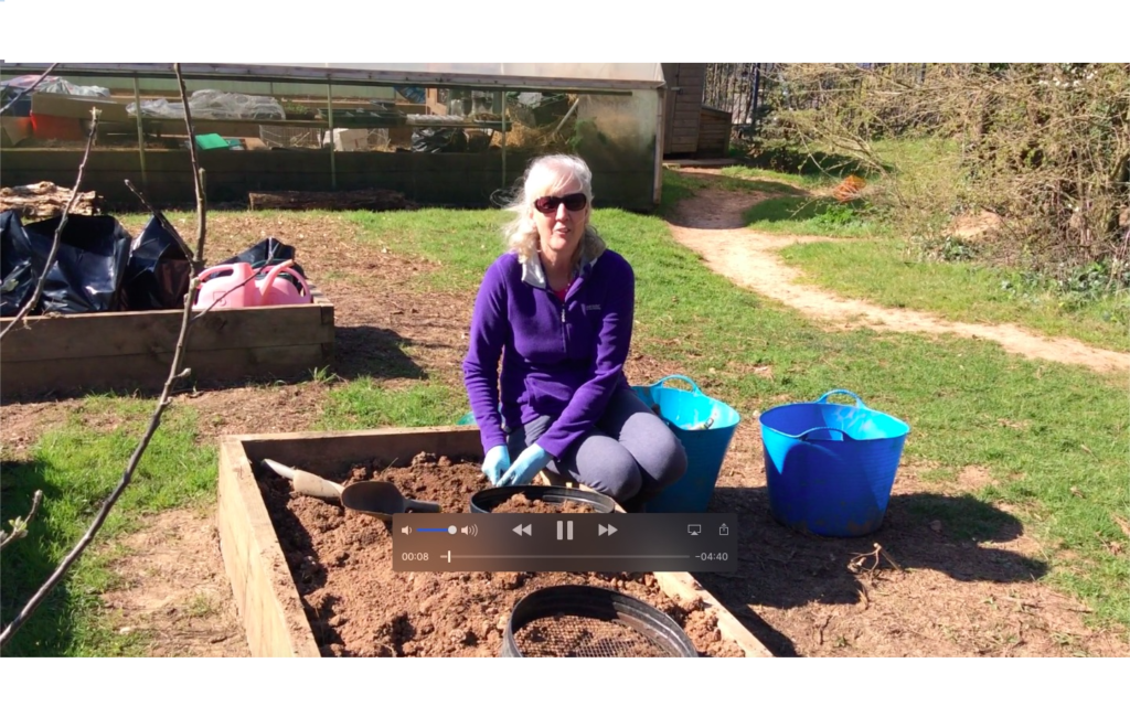 Forest School – Broad Beans